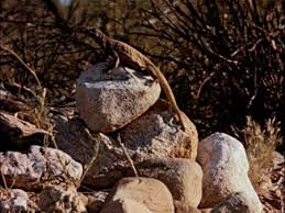 Lizards of the Arizona Desert