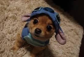 dog costume 4
