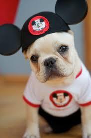 dog costume 5
