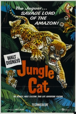 jungle cat 1