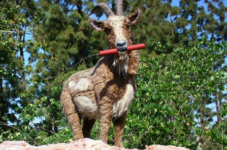 Big-Thunder-Mountain-Goat-Chewing-Dynamite